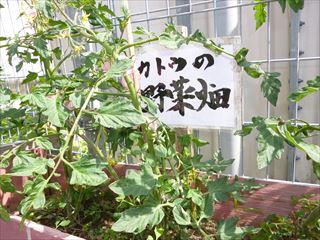 mhatake1_R.JPG